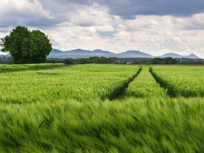 Federação de agro do RS cria portal para estimular digitalização do setor