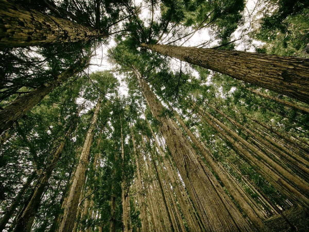 Aliança de grandes empresas de blockchain criará padrão para token de crédito de carbono