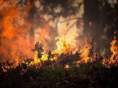 Mercado Bitcoin cria carteira para doação a brigada que combate incêndio no Pantanal