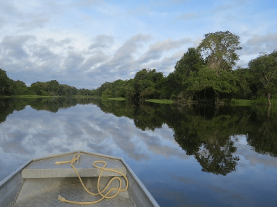 JBS lança programa que inclui blockchain para rastrear gado da Amazônia