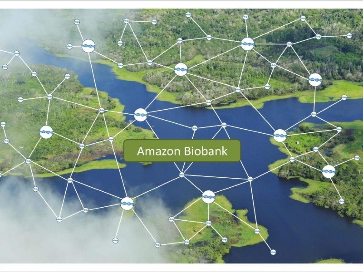 Biobanco da Amazônia testa blockchain para registro de DNA da floresta e uso de biomoedas