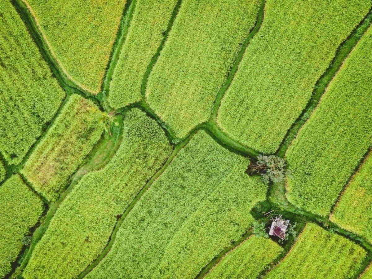Depois da Rice Exchange, agora a Fertilizer Exchange será lançada; ambas usam blockchain