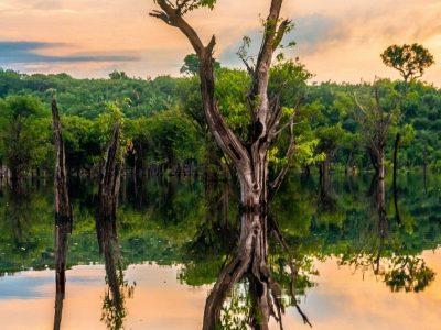 AmazonasCoin vai lançar token lastreado em carbono na Stonoex