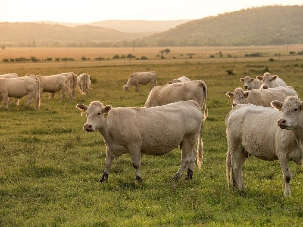 Governo vai propor lei para rastrear fornecedor de gado para frigorífico